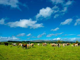 farm-cattle-cows-agriculture-organic_cropid_2370132
