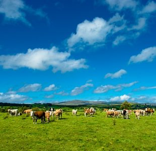 farm-cattle-cows-agriculture-organic_cropid_2370132